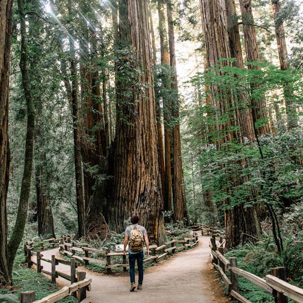 Paths to follow, entrepreneurship, forest